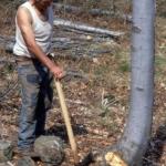Il taglio del bosco -2- Gianni Ottonello