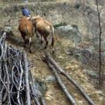 Il taglio del bosco -4- Gianni Ottonello