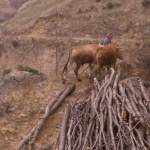 Il taglio del bosco -7- Gianni Ottonello
