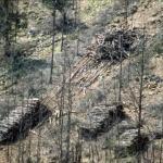 Il taglio del bosco -8- Gianni Ottonello