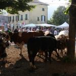 Fiera del bestiame al Paese Vecchio - Foto di Gianni Ottonello