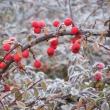 Inverno - Foto di Gianni Ottonello