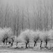Brina – Foto di Gianni Ottonello