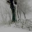Rigore invernale - Foto di Gianni Ottonello