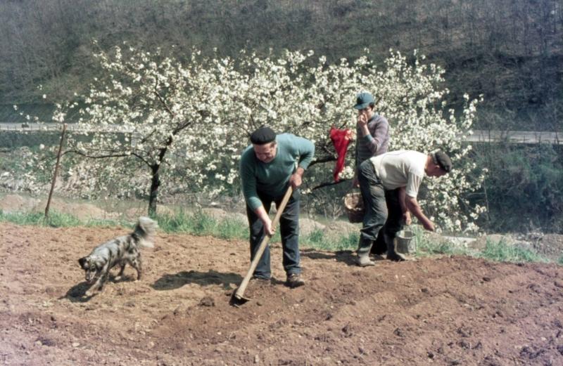 Tempo di semina - Foto di Gianni Ottonello
