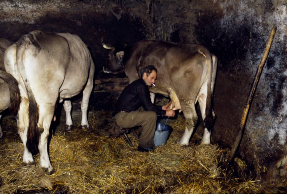 Mondo contadino della Valle Stura - la mungitura - Foto di Gianni Ottonello