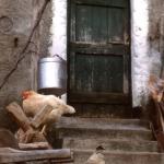 Sull'aia - Foto di Gianni Ottonello