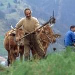 Tempo di concimatura dei prati e dei campi - Foto di Gianni Ottonello
