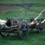 Mondo contadino: il vecchio carro - Foto di Gianni Ottonello