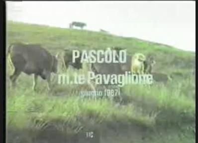 Pascolo al Monte Pavaglione