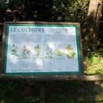 Festa delle Orchidee