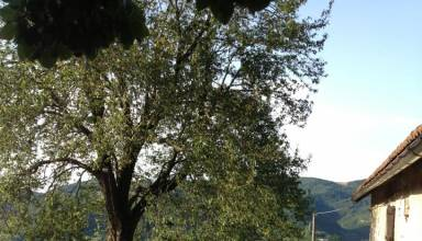 Vivaio Forestale Masone : Masone u pagina u multimedia u telemasone rete vallestura